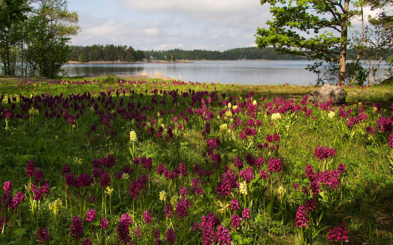 ängsö Nationalpark Sveriges Nationalparker Välj Nationalpark