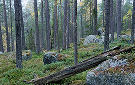 Björnlandet Nationalpark