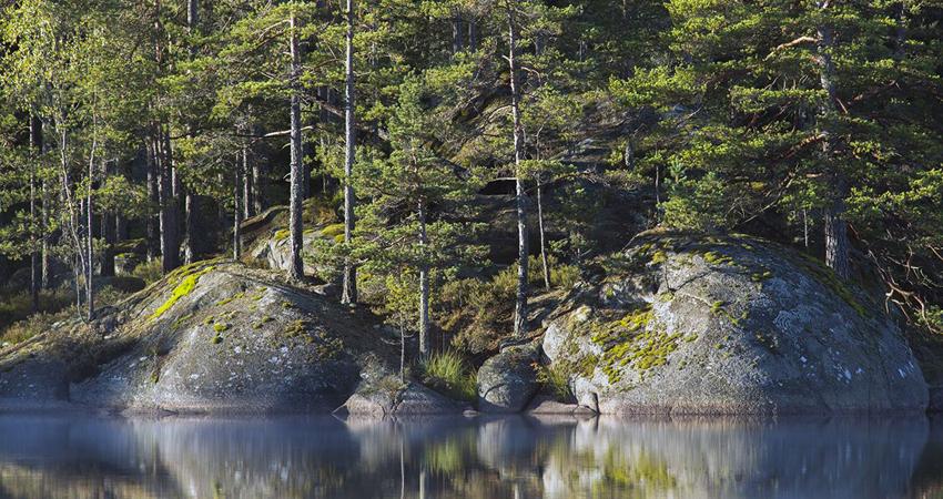 tiveden karta Dokument och kartor   Tivedens nationalpark | Besöksinformation  tiveden karta